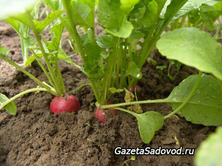свой цитатник или сообщество!  Чередование овощных культур.  Сегодня, к сожалению, на большинстве садовых и...